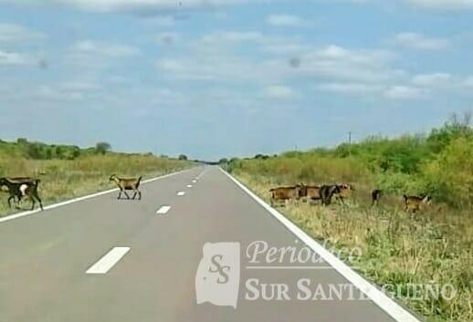 animales rutasss