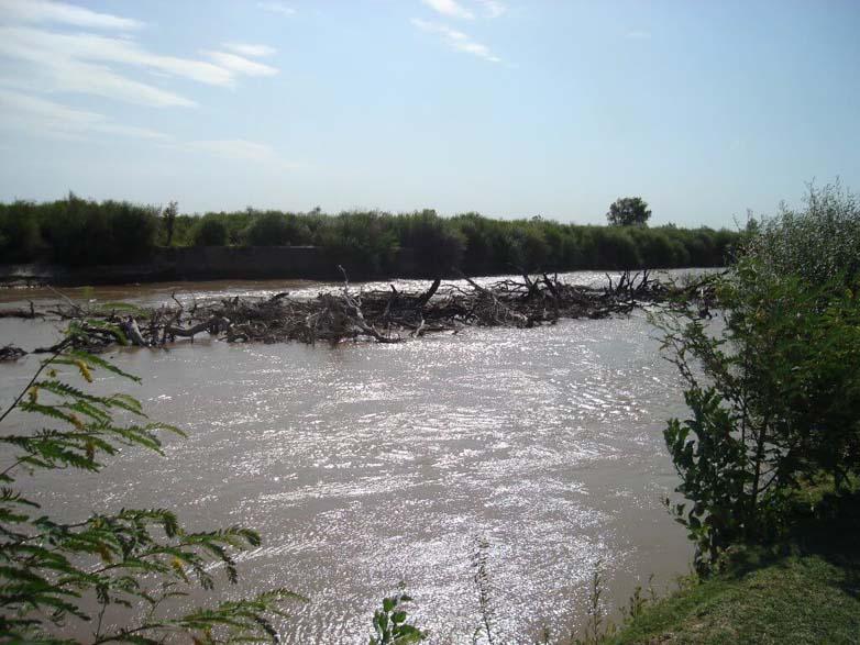 rio utis