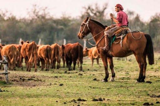 trabajo con ganado