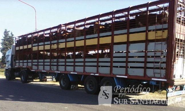 camion-jaula