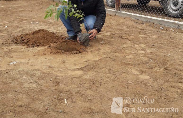 araujo planta