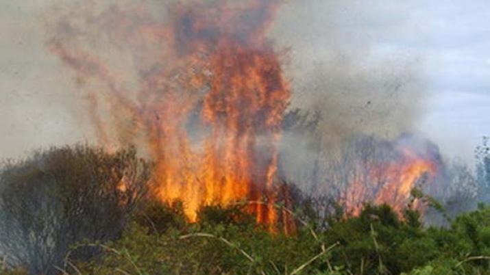 quema pastizales