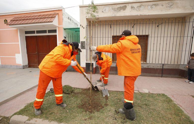 arboles centros operativos plantacion