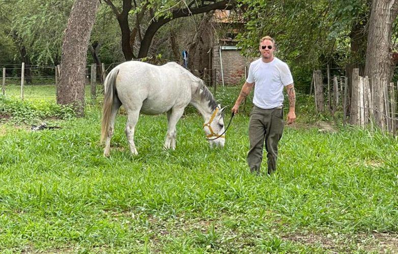 caballo rescatodo