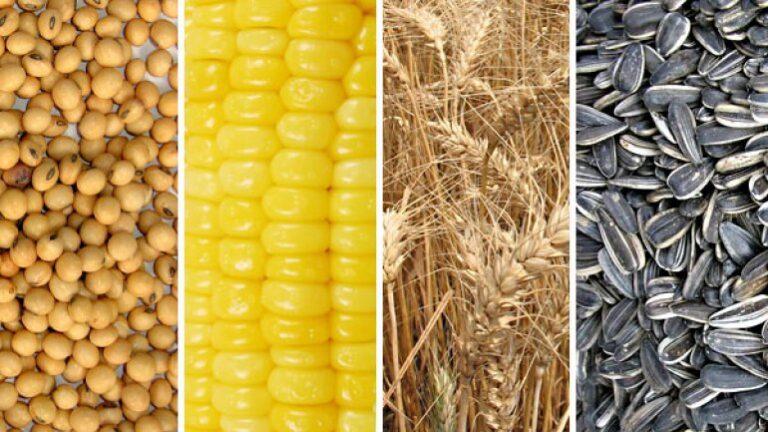 maiz trigo soja girazol